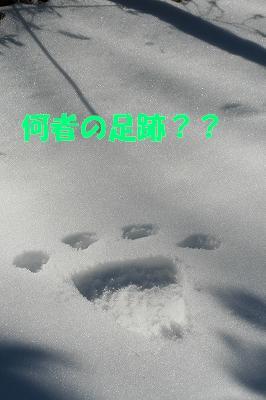 IMG_4894-s.jpg