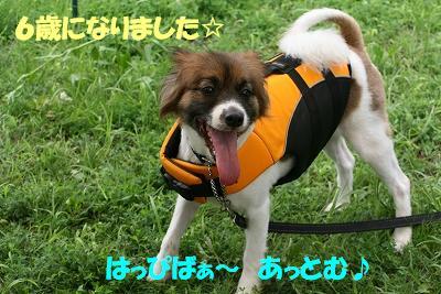 IMG_8819-s.jpg